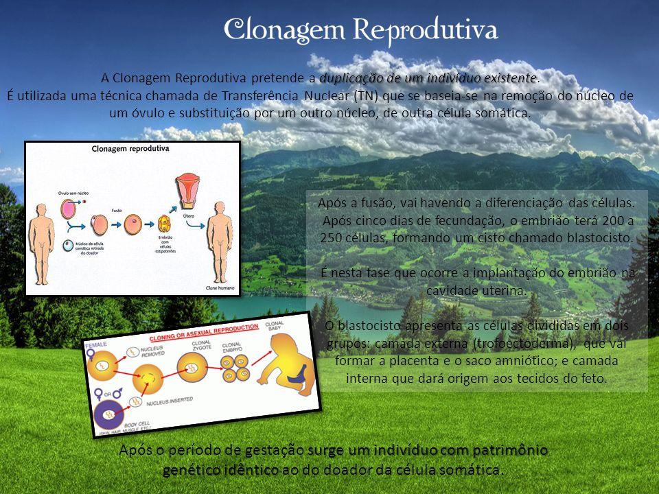 A Clonagem Reprodutiva pretende a duplicação de um indivíduo existente.