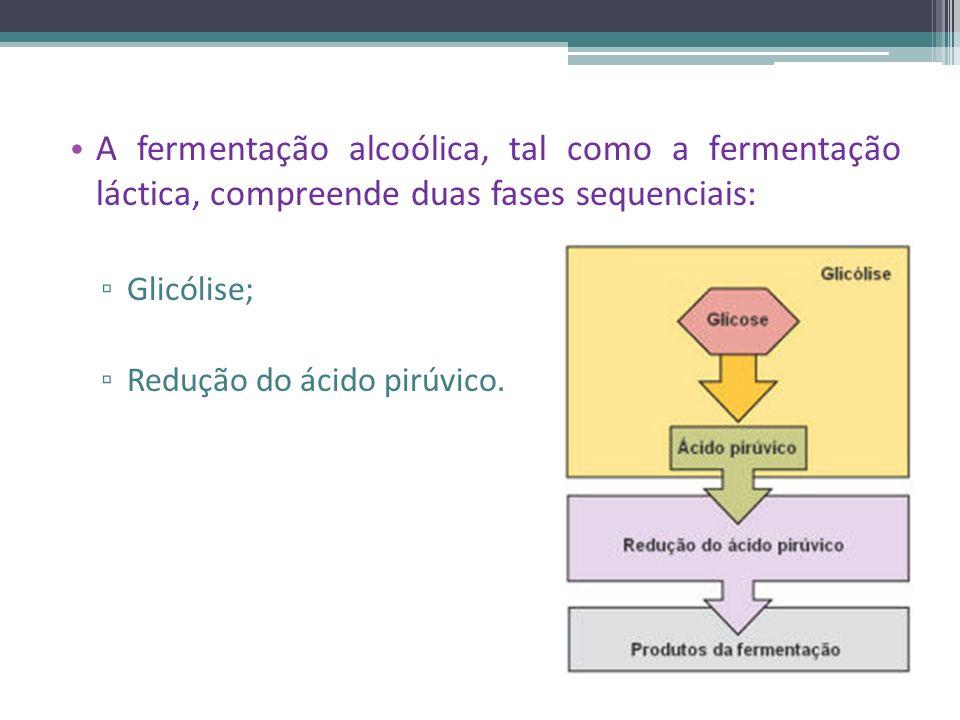 A fermentação alcoólica, tal como a fermentação láctica, compreende duas fases sequenciais: