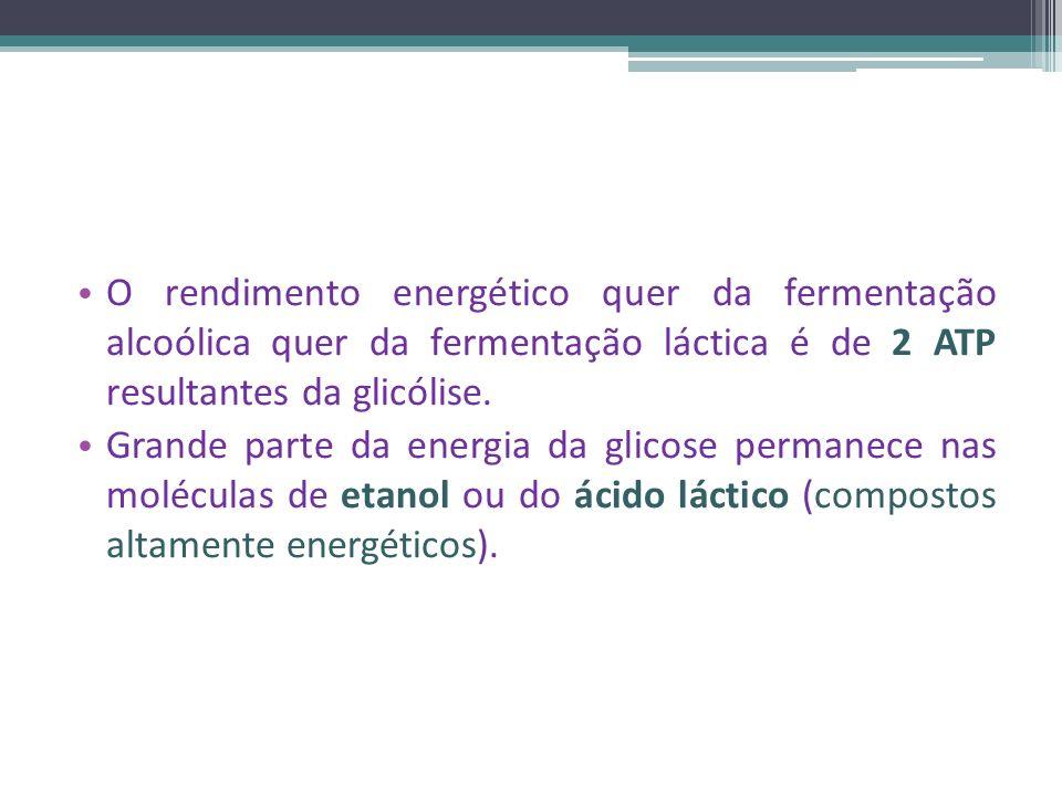 O rendimento energético quer da fermentação alcoólica quer da fermentação láctica é de 2 ATP resultantes da glicólise.