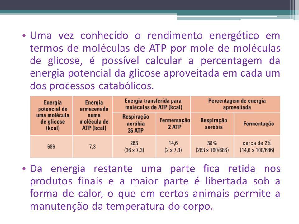 Uma vez conhecido o rendimento energético em termos de moléculas de ATP por mole de moléculas de glicose, é possível calcular a percentagem da energia potencial da glicose aproveitada em cada um dos processos catabólicos.