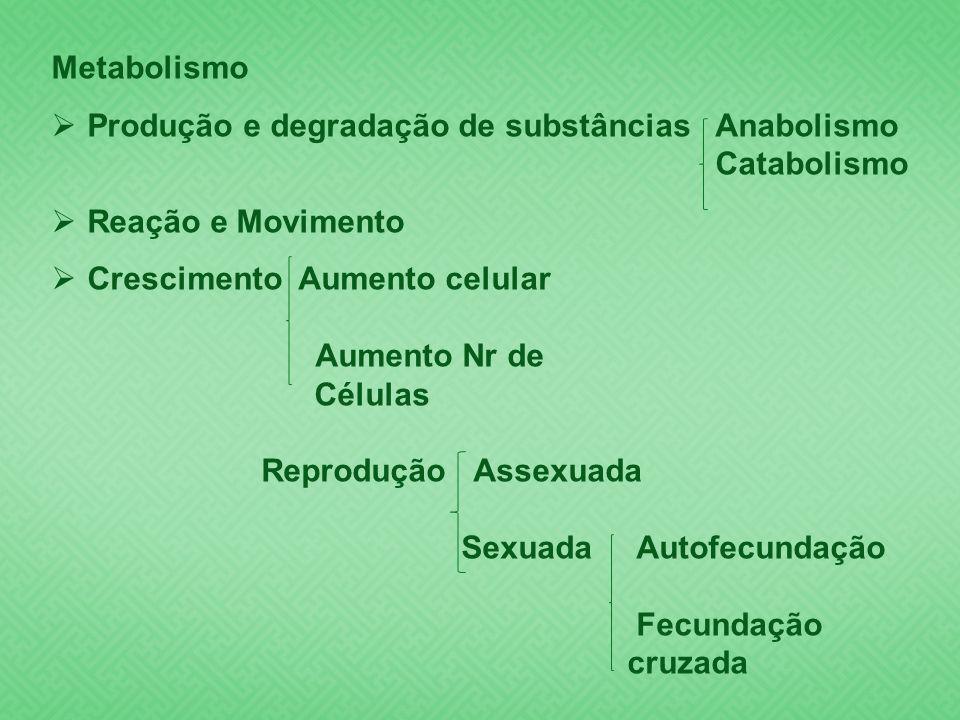 Metabolismo Produção e degradação de substâncias Anabolismo. Catabolismo. Reação e Movimento. Crescimento Aumento celular.