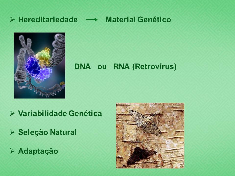 Hereditariedade Material Genético