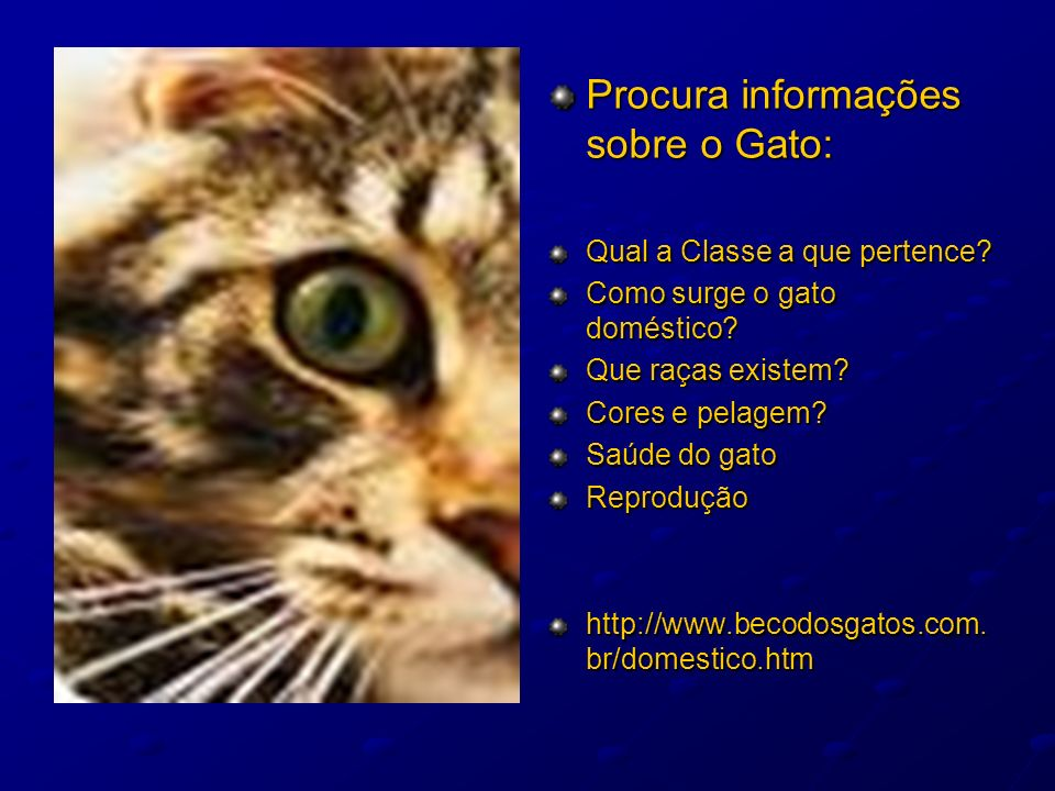 Procura informações sobre o Gato: