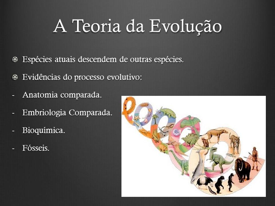 A Teoria da Evolução Espécies atuais descendem de outras espécies.
