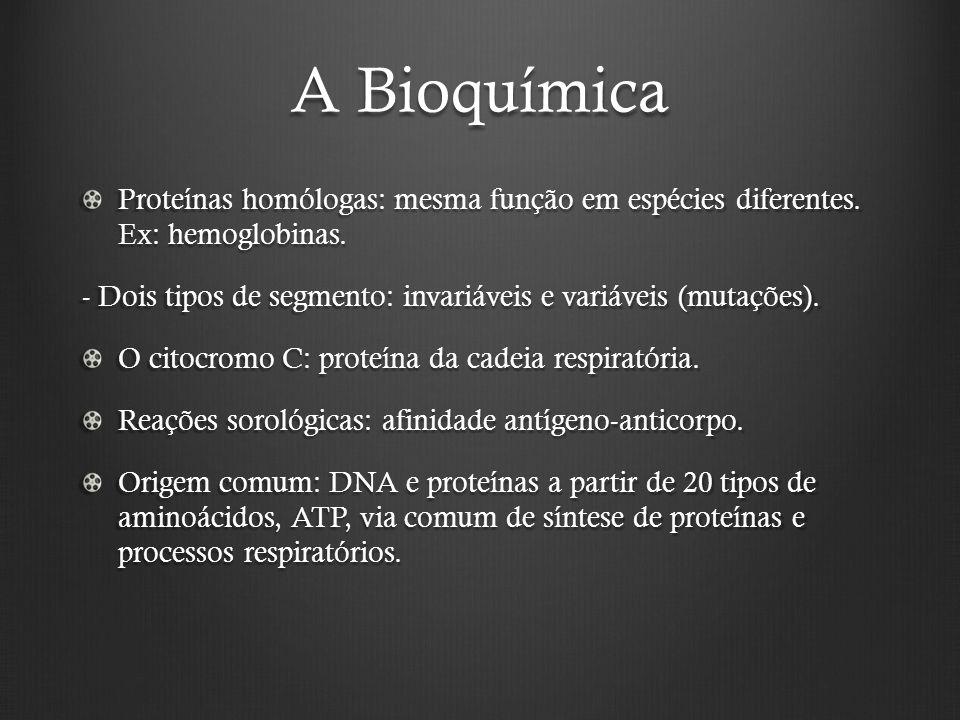 A Bioquímica Proteínas homólogas: mesma função em espécies diferentes. Ex: hemoglobinas.