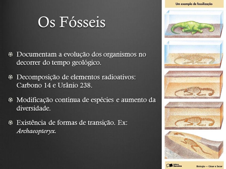 Os Fósseis Documentam a evolução dos organismos no decorrer do tempo geológico. Decomposição de elementos radioativos: Carbono 14 e Urânio 238.
