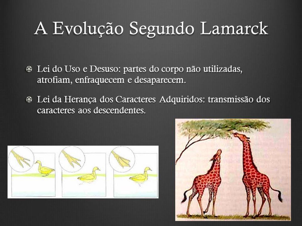 A Evolução Segundo Lamarck