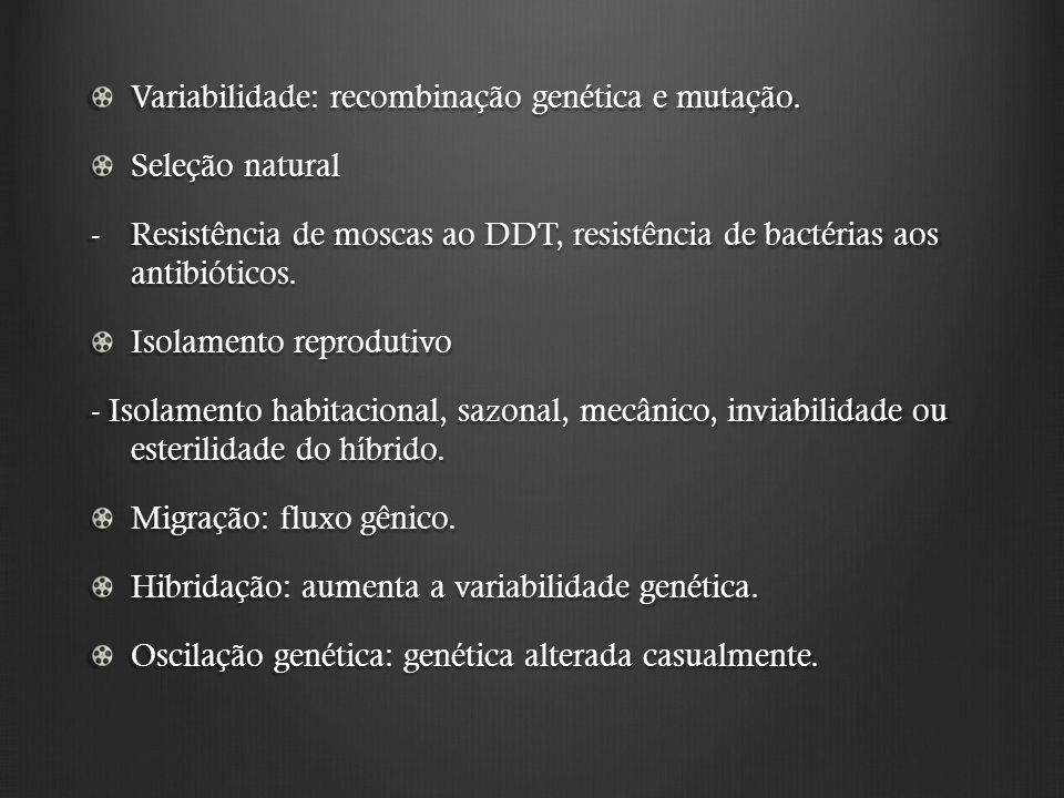 Variabilidade: recombinação genética e mutação.