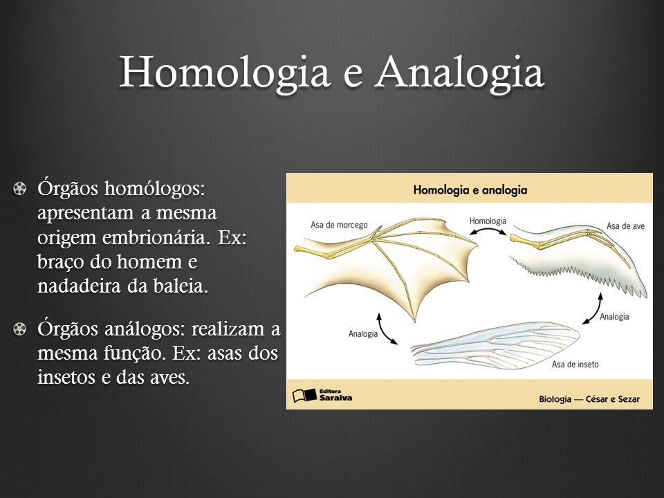 Homologia e Analogia Órgãos homólogos: apresentam a mesma origem embrionária. Ex: braço do homem e nadadeira da baleia.