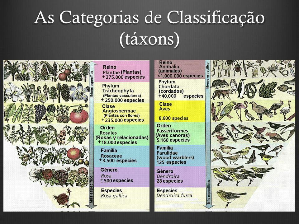 As Categorias de Classificação (táxons)