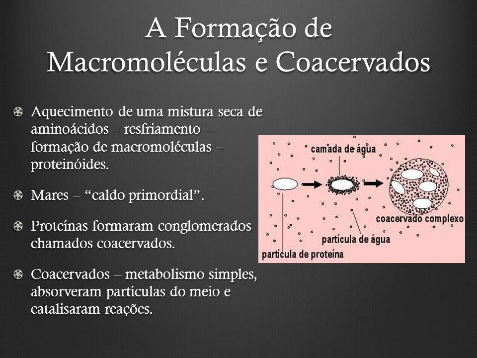 A Formação de Macromoléculas e Coacervados