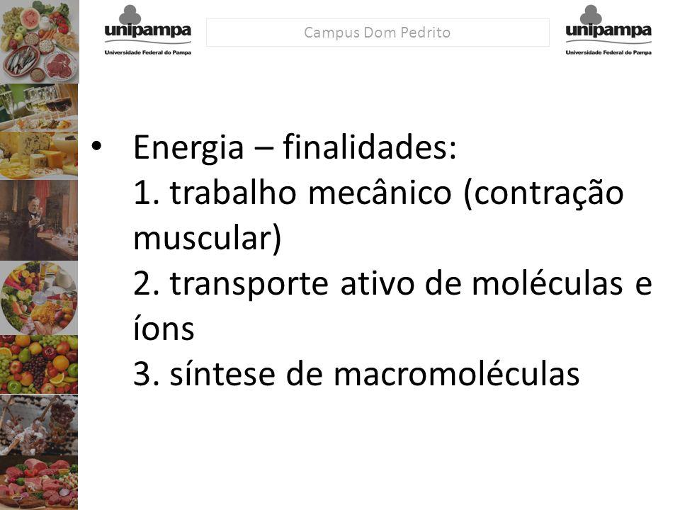 Energia – finalidades: 1. trabalho mecânico (contração muscular) 2