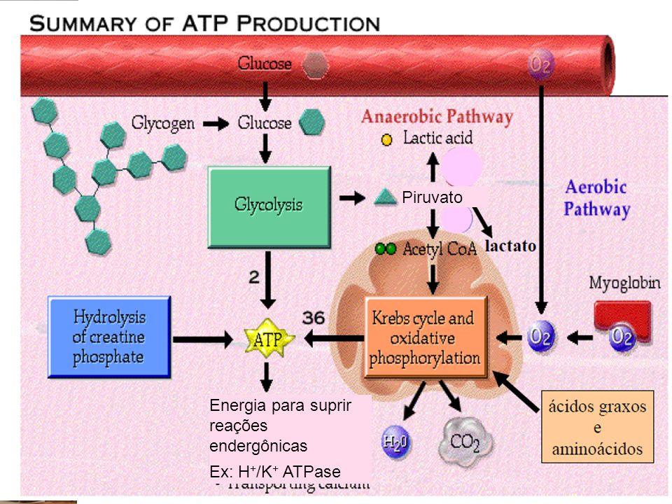 Energia para suprir reações endergônicas