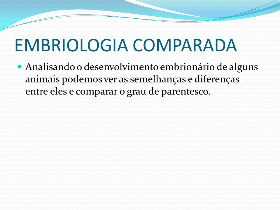 EMBRIOLOGIA COMPARADA