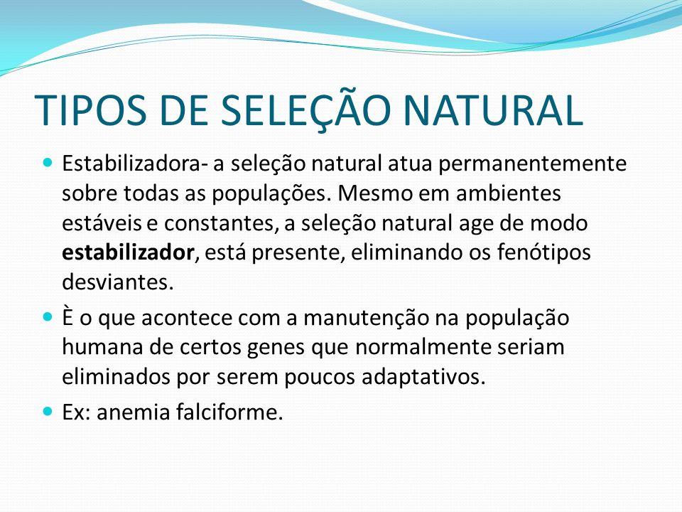 TIPOS DE SELEÇÃO NATURAL