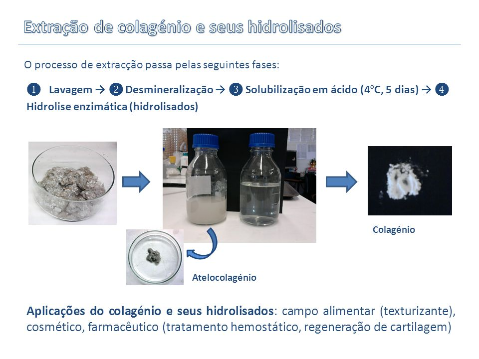 Extração de colagénio e seus hidrolisados
