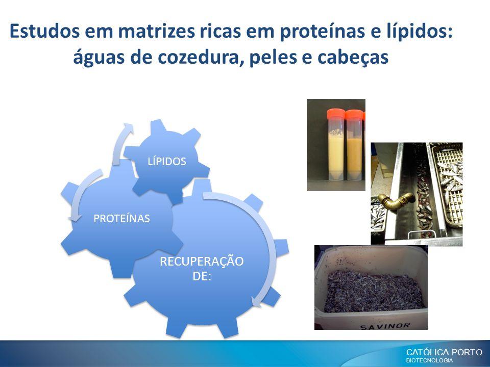 Estudos em matrizes ricas em proteínas e lípidos: águas de cozedura, peles e cabeças