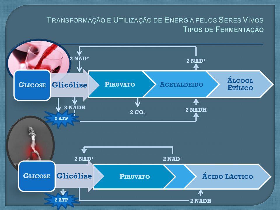 Transformação e Utilização de Energia pelos Seres Vivos Tipos de Fermentação