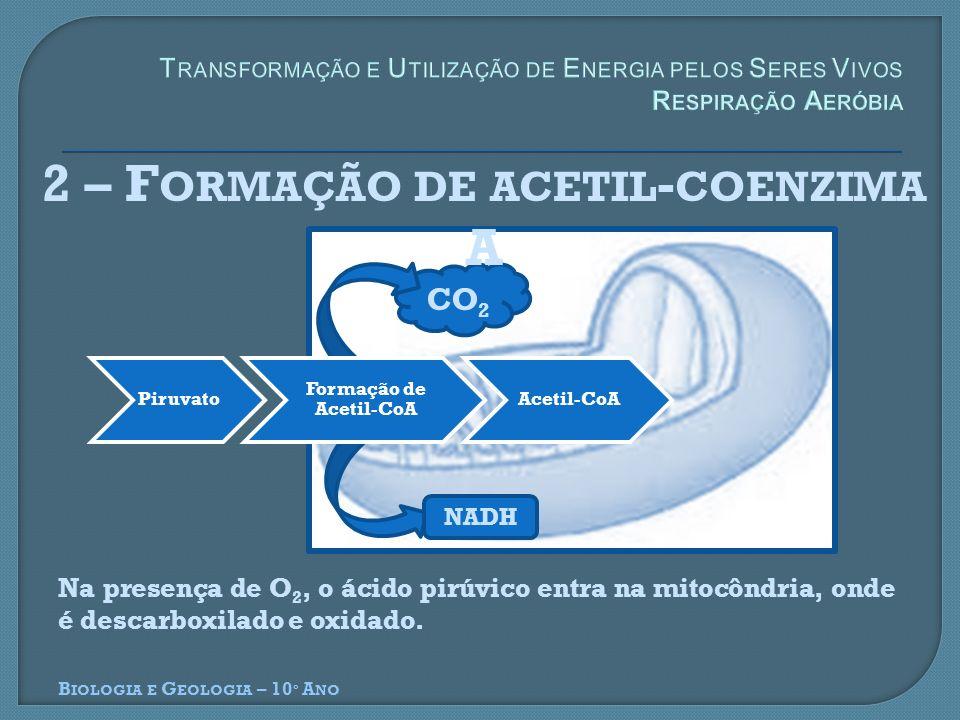 2 – Formação de acetil-coenzima A