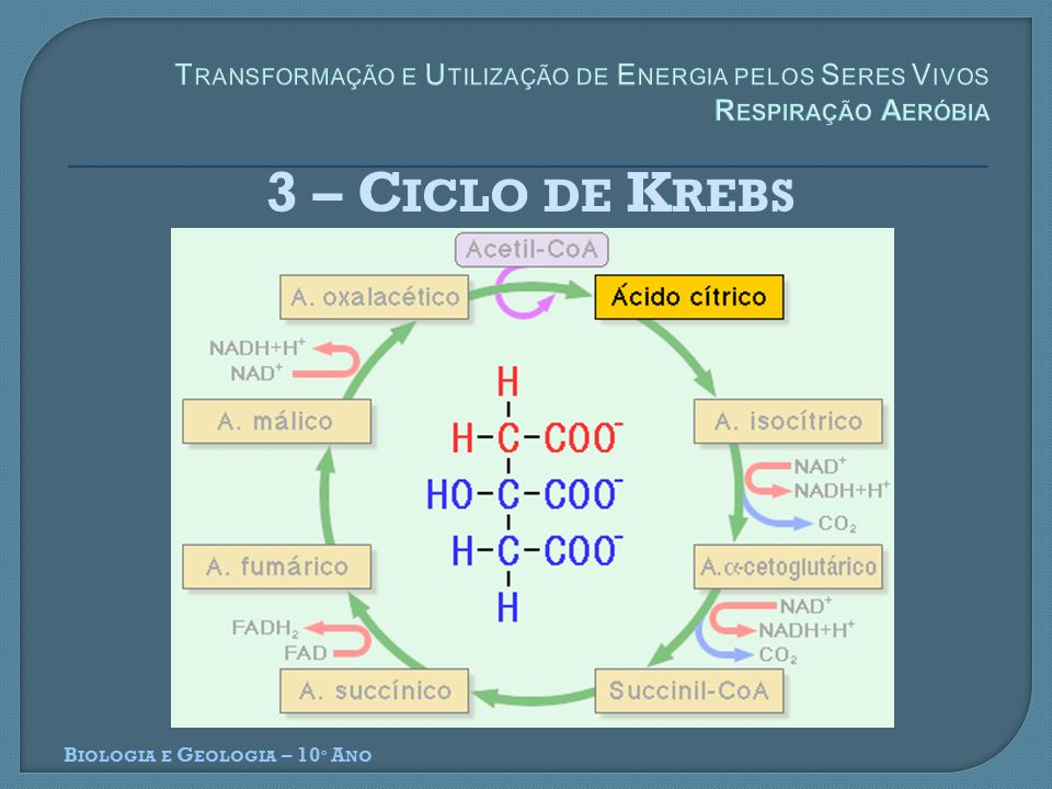 Transformação e Utilização de Energia pelos Seres Vivos Respiração Aeróbia