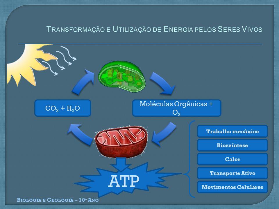 Transformação e Utilização de Energia pelos Seres Vivos