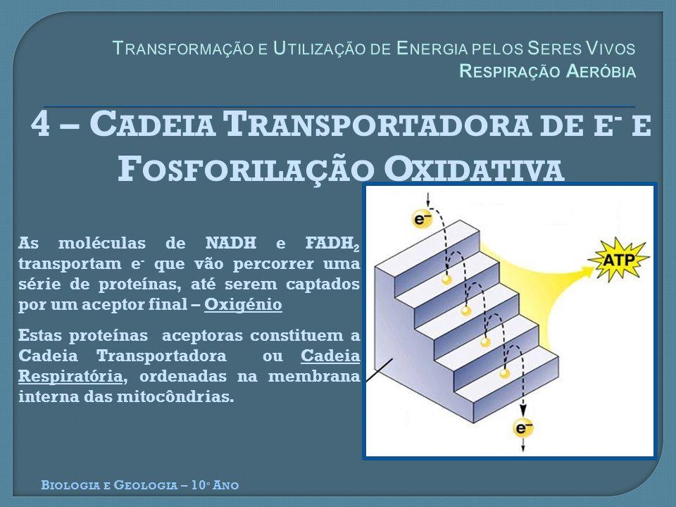 4 – Cadeia Transportadora de e- e Fosforilação Oxidativa