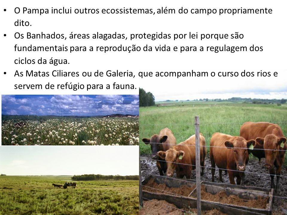 O Pampa inclui outros ecossistemas, além do campo propriamente dito.