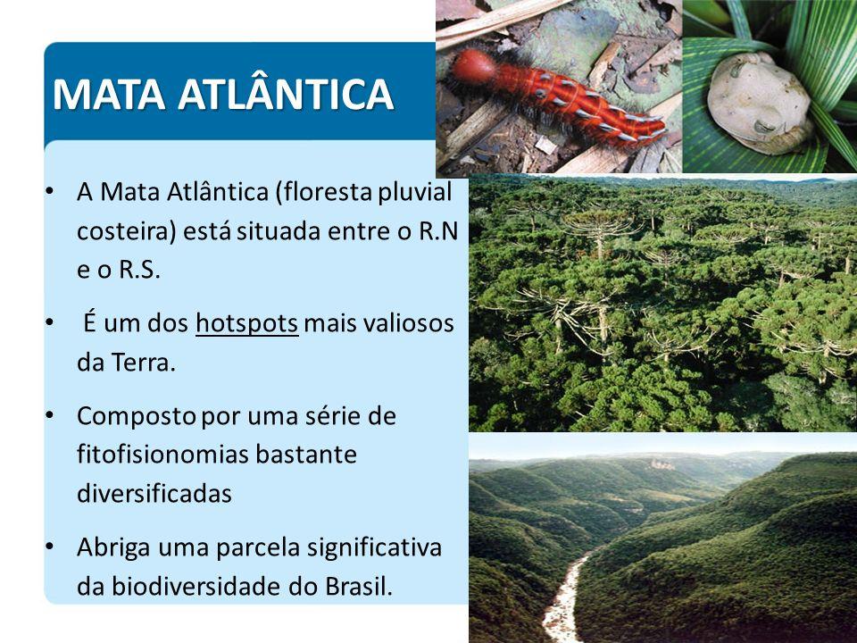 MATA ATLÂNTICA A Mata Atlântica (floresta pluvial costeira) está situada entre o R.N e o R.S. É um dos hotspots mais valiosos da Terra.