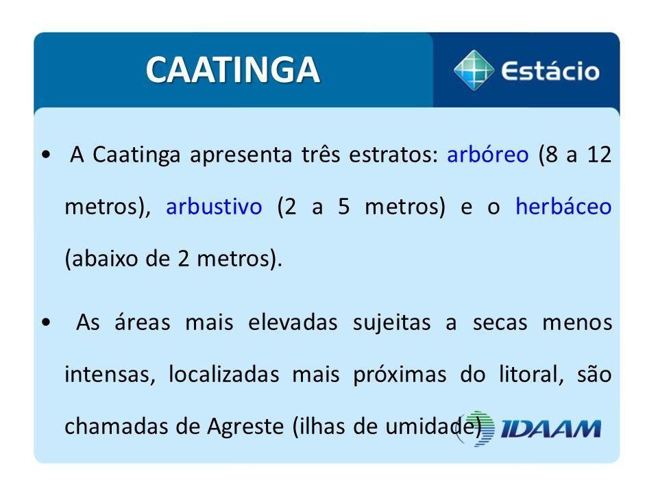 CAATINGA A Caatinga apresenta três estratos: arbóreo (8 a 12 metros), arbustivo (2 a 5 metros) e o herbáceo (abaixo de 2 metros).