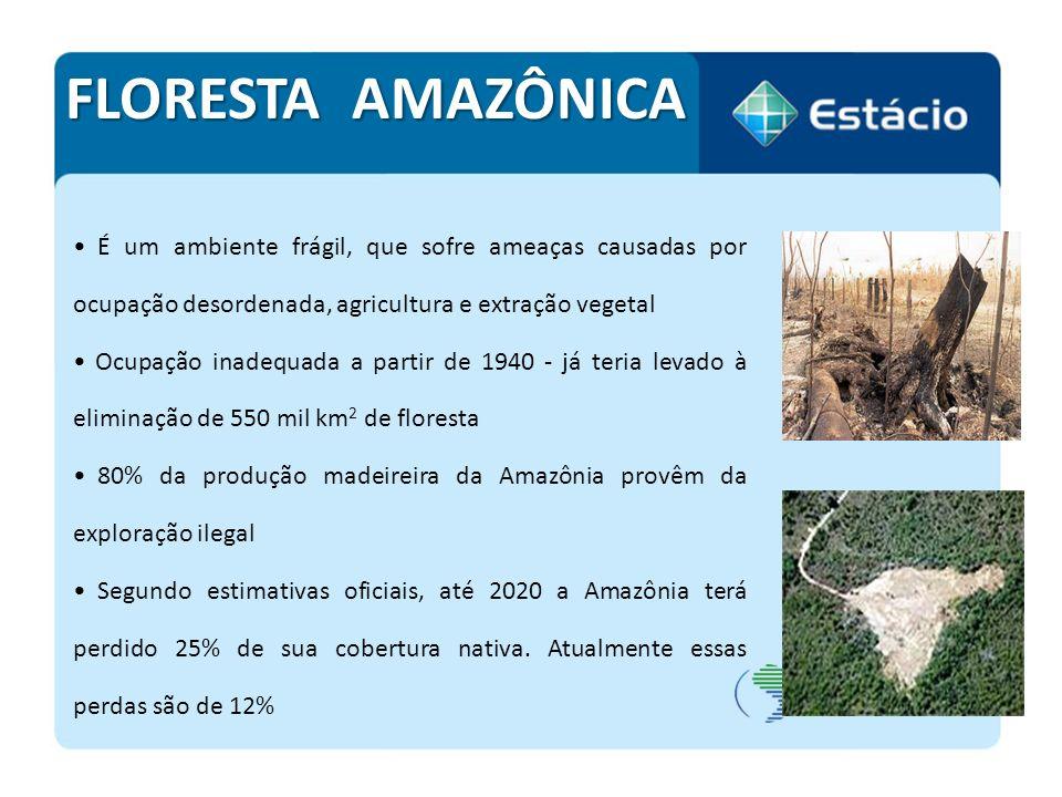 FLORESTA AMAZÔNICA É um ambiente frágil, que sofre ameaças causadas por ocupação desordenada, agricultura e extração vegetal.