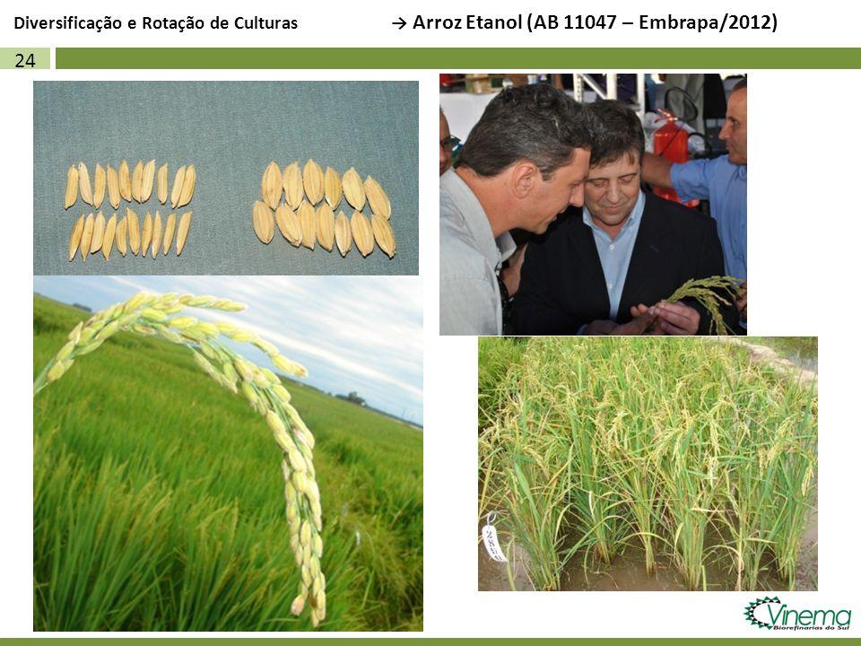 Diversificação e Rotação de Culturas → Arroz Etanol (AB 11047 – Embrapa/2012)