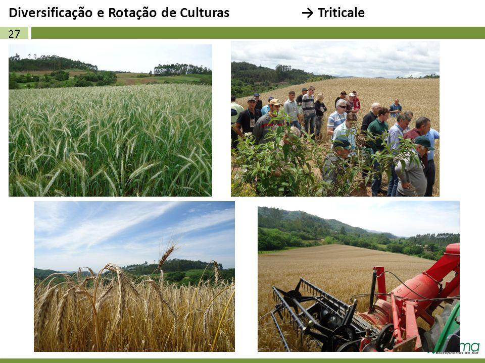 Diversificação e Rotação de Culturas → Triticale