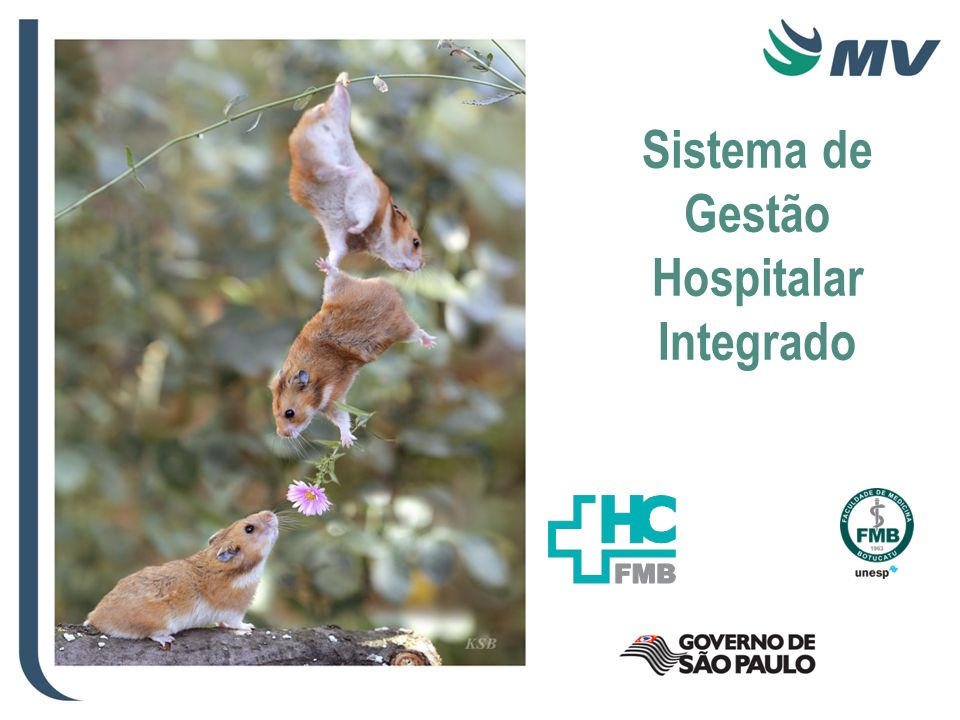 Sistema de Gestão Hospitalar Integrado