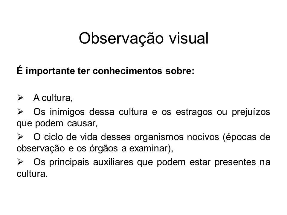 Observação visual É importante ter conhecimentos sobre: A cultura,