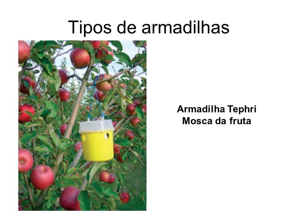 Tipos de armadilhas Armadilha Tephri Mosca da fruta