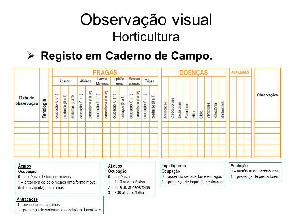 Observação visual Horticultura