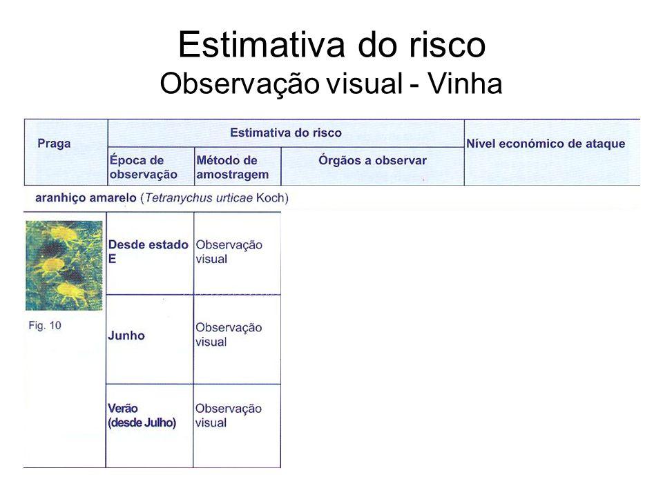 Estimativa do risco Observação visual - Vinha