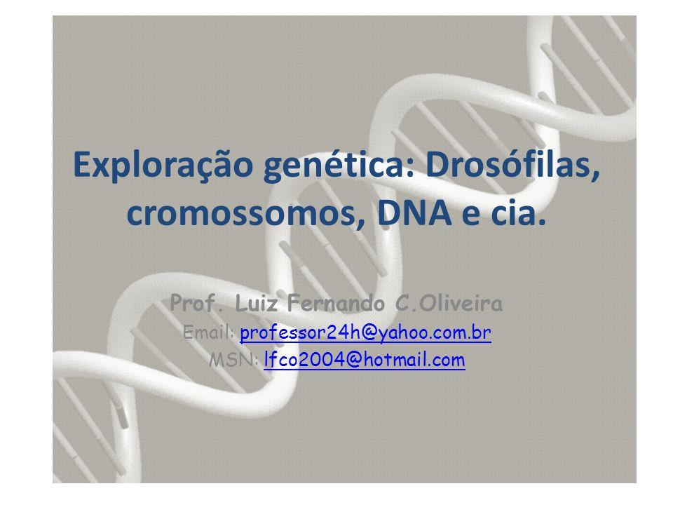 Exploração genética: Drosófilas, cromossomos, DNA e cia.