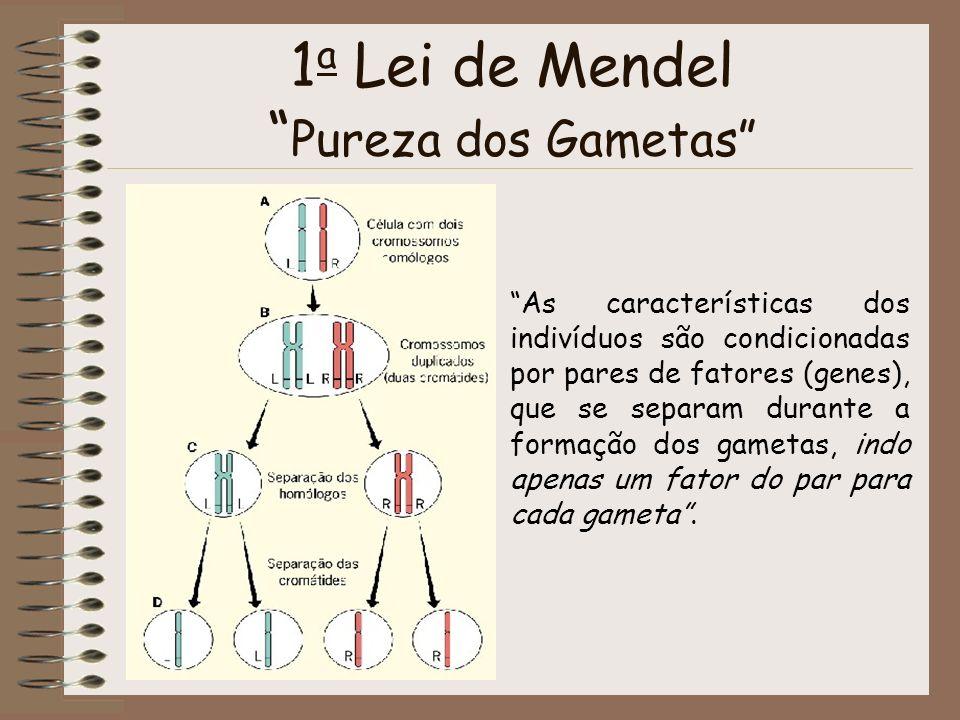 1a Lei de Mendel Pureza dos Gametas
