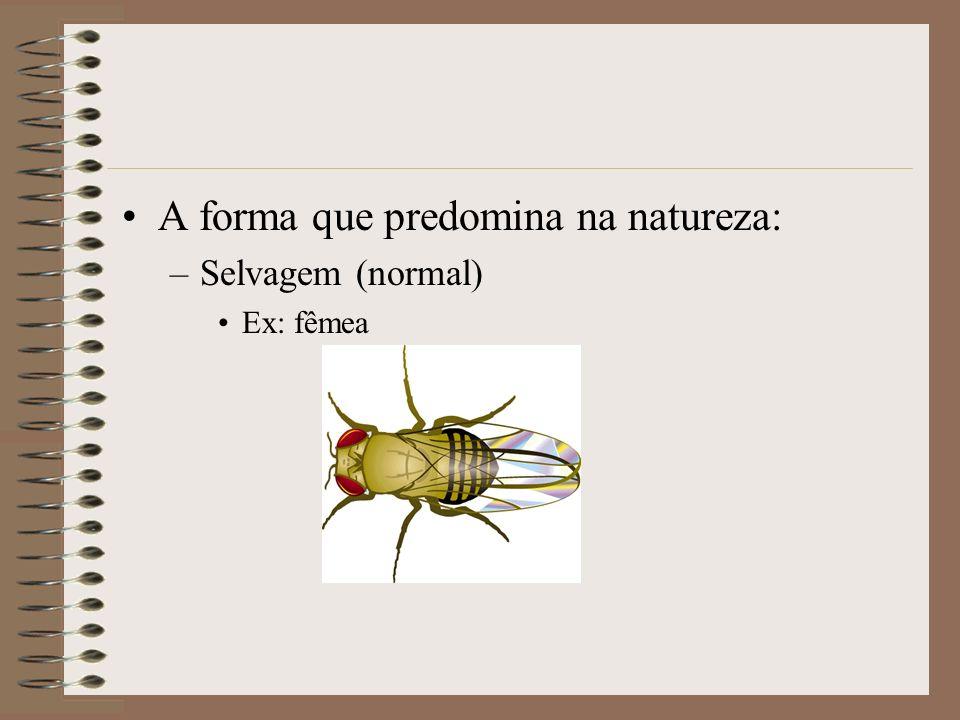 A forma que predomina na natureza: