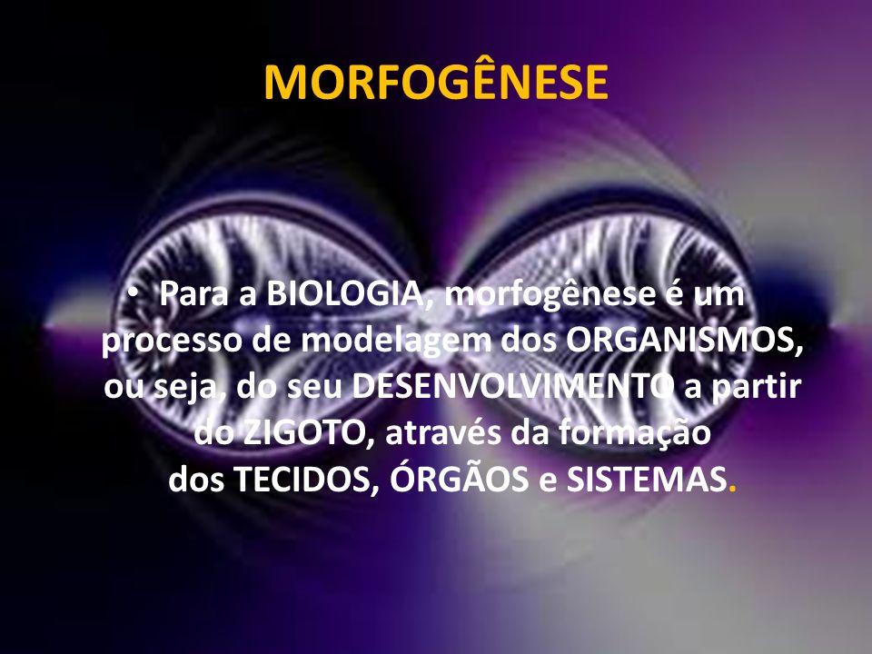 MORFOGÊNESE