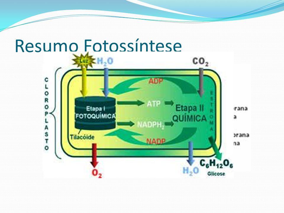 Resumo Fotossíntese