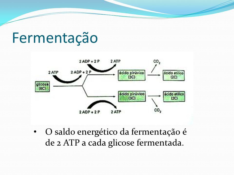 Fermentação O saldo energético da fermentação é de 2 ATP a cada glicose fermentada.