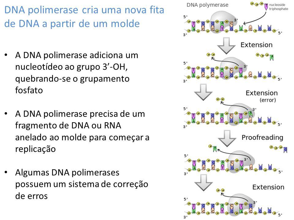 DNA polimerase cria uma nova fita de DNA a partir de um molde