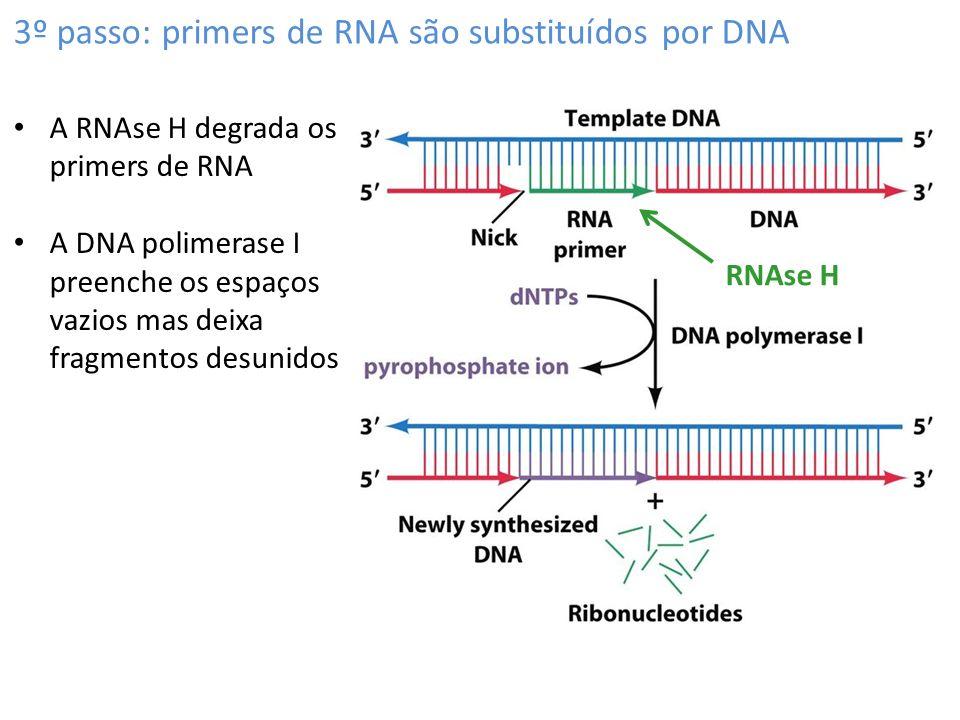3º passo: primers de RNA são substituídos por DNA