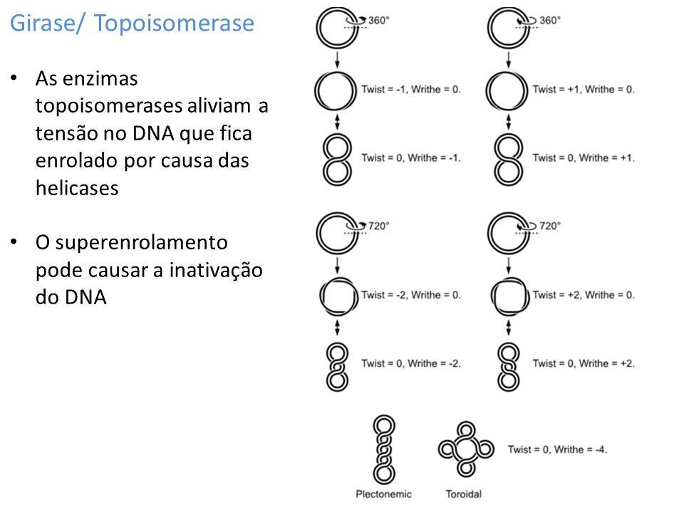 Girase/ Topoisomerase