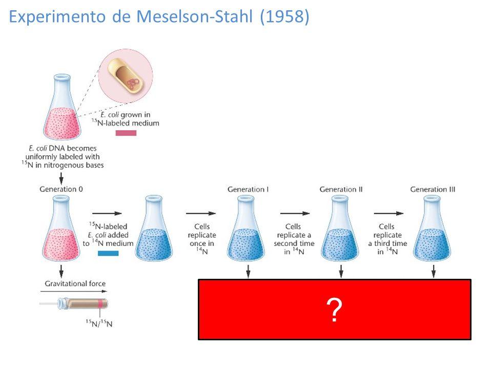 Experimento de Meselson-Stahl (1958)