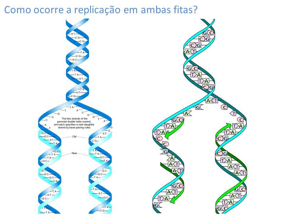 Como ocorre a replicação em ambas fitas