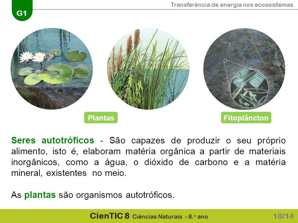 As plantas são organismos autotróficos.
