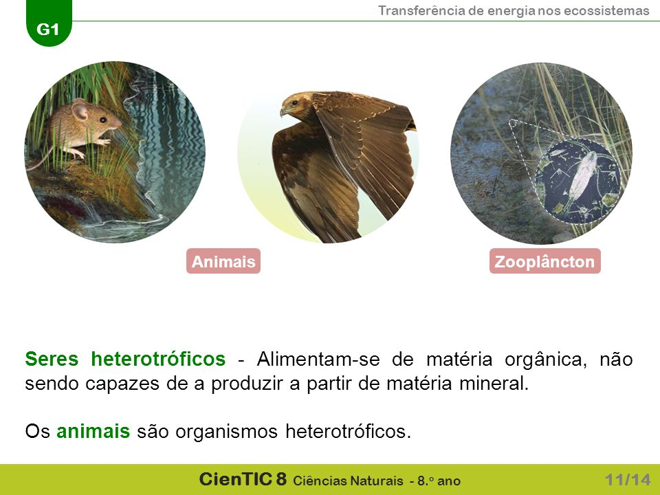 Os animais são organismos heterotróficos.